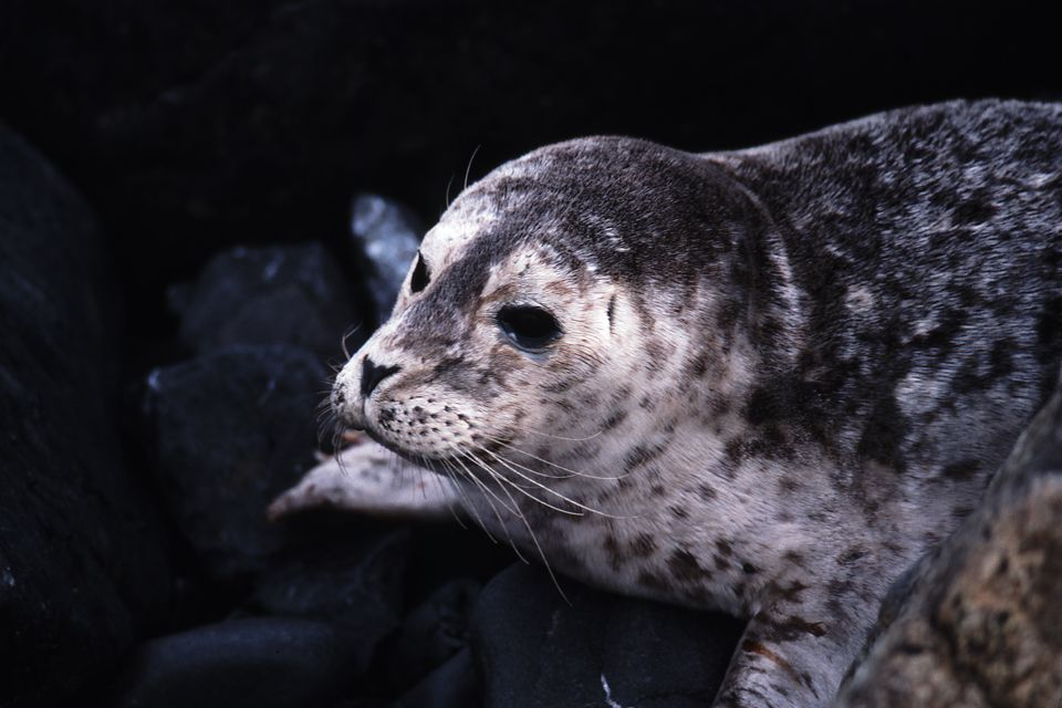 wildlife_seal_trinidad_web.jpg